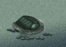 Chiton Illustration