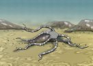 Brittle Star Illustration