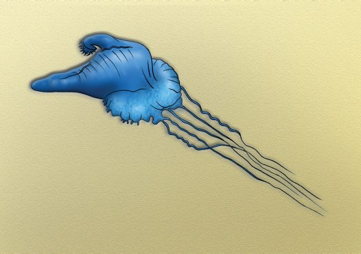 Bluebottle Illustration
