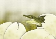Saltwater Crocodile Illustration
