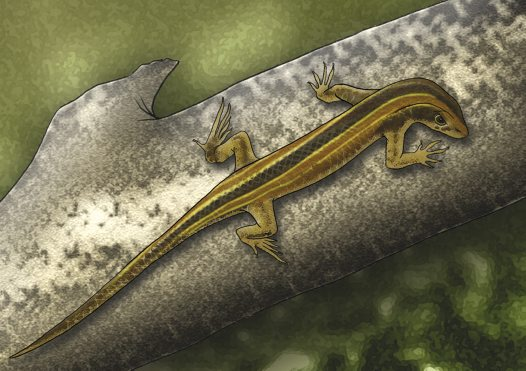 Robust Striped Skink Illustration
