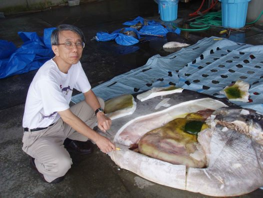 Dr Keiichi Matsuura with a dissected Sunfish