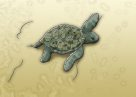 Green Turtle Illustration