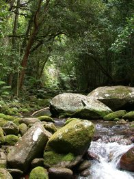 Rainforest stream in Wet Tropics