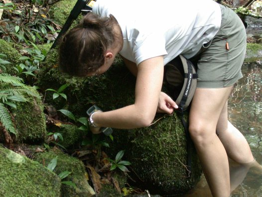 Jodi Rowley recording frog temperature
