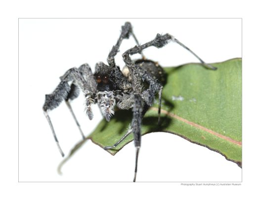 Spiders Seek Spiders for Dinners, Lunches and Breakfasts #1
