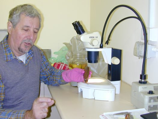 Barry Russell examining a specimen of Threadfin Bream