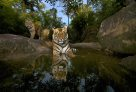 Wildlife Photographer of the Year 2012 #2
