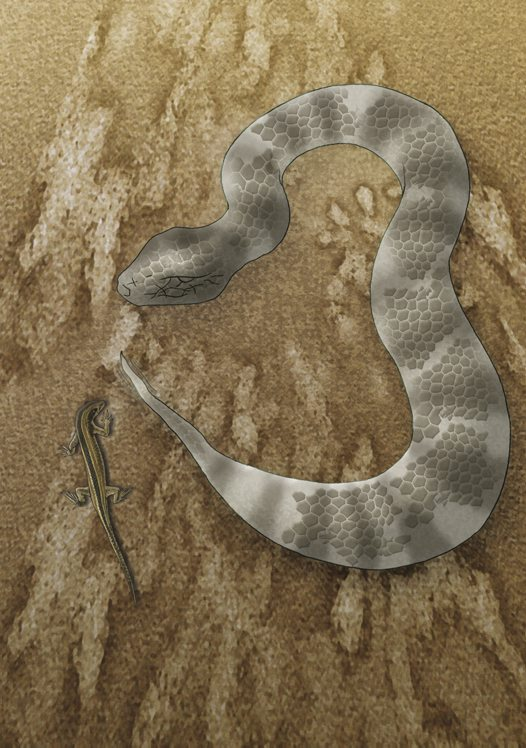 Common Death Adder Illustration