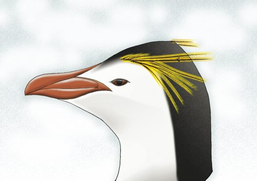 Royal Penguin Illustration
