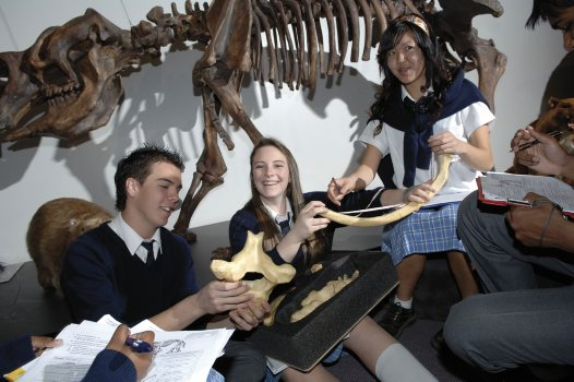 Students with Diprotodon vertebra and rib