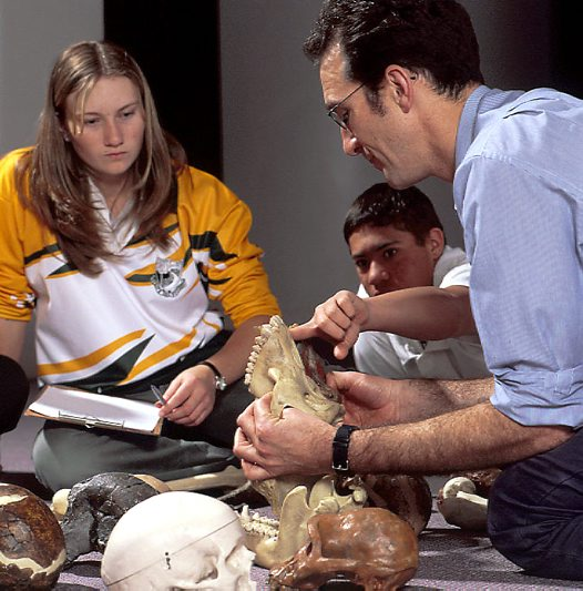 Students with hominid skulls
