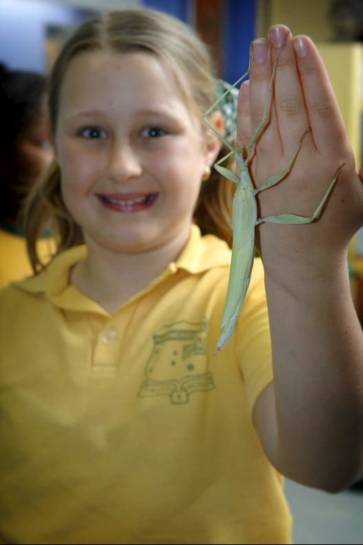 Primary student with phasmid