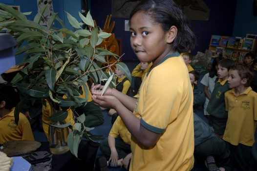 Student with phasmid and leaves