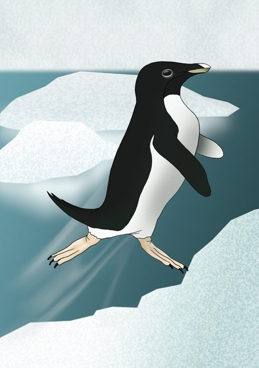 Adelie Penguin Illustration