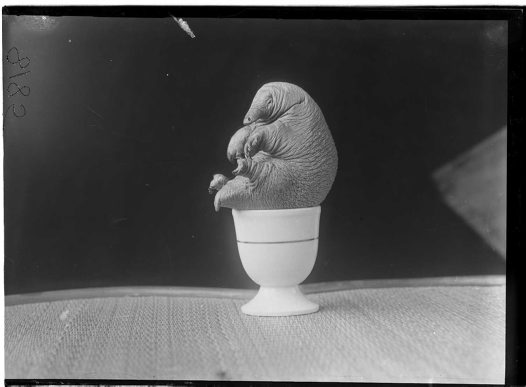 HJ Burrell photo: Echidna in egg-cup