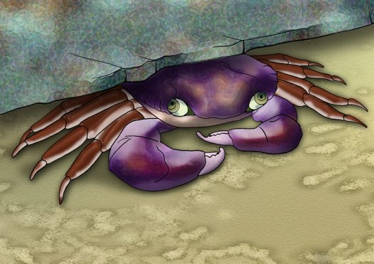Swift-footed Crab Illustration