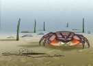Semaphore Crab Illustration