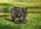 Wallaby Illustration
