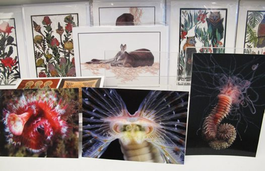 Polychaete postcards