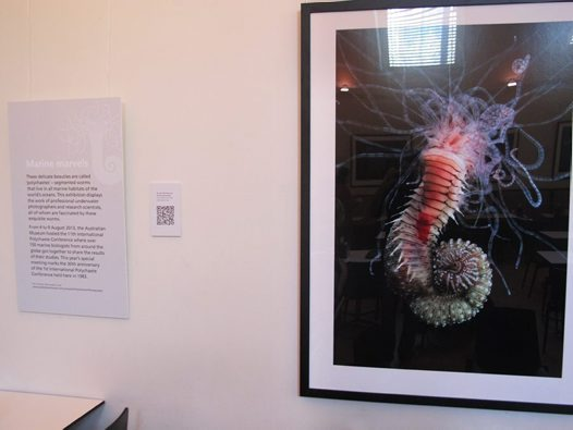 Polychaetes Display #3