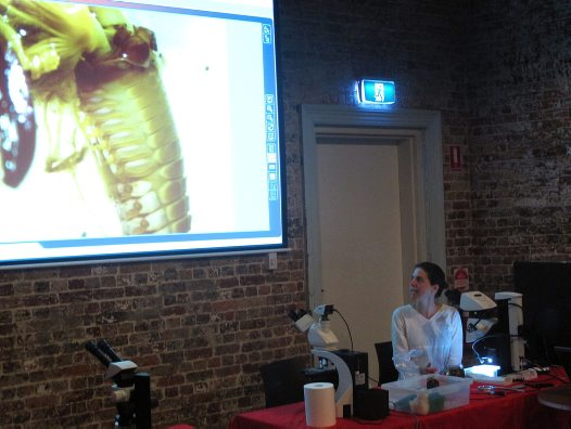 Inside Pest polychaete workshop #2
