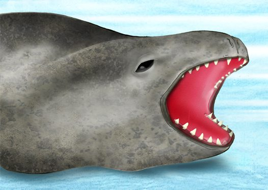 Leopard Seal Illustration