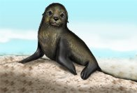 Fur Seal Illustration