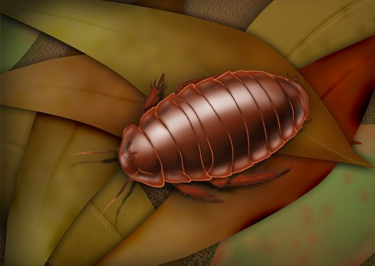 Cockroach Illustration