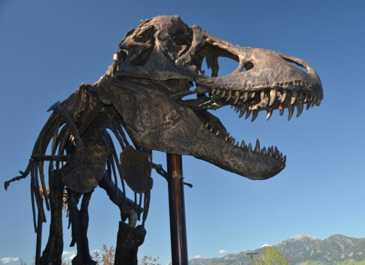 Fierce Creatures: Tyrannosaurs and their Meat-Eating Kin