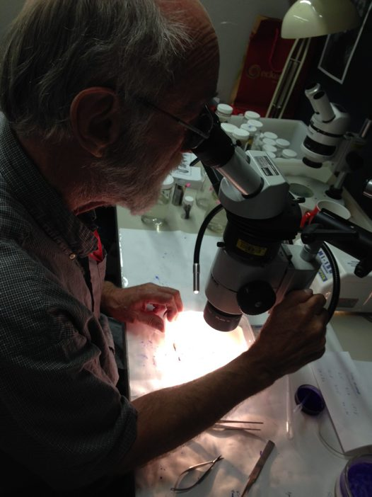 Ronald Altig and microscope