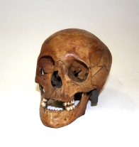 Skull of Lucretia Dunkley: P1206