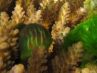 Life at Lizard: Goby gardening #1