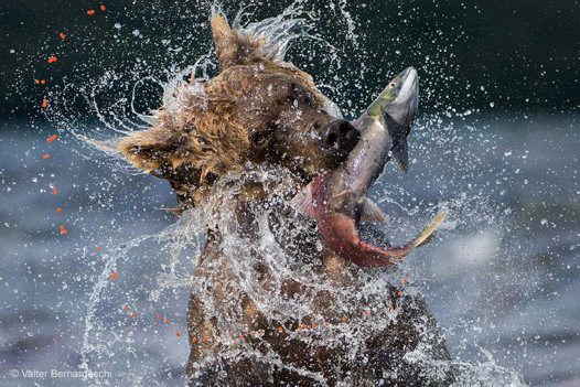 Wildlife Photographer of the Year #1
