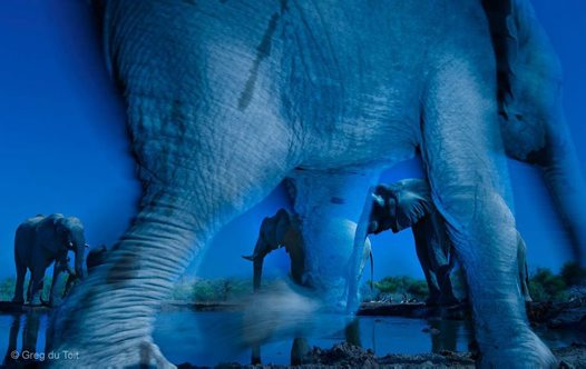 Wildlife Photographer of the Year #3
