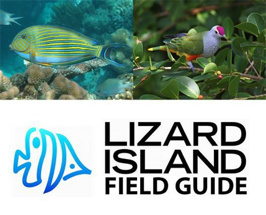 Lizard Island Field Guide #4