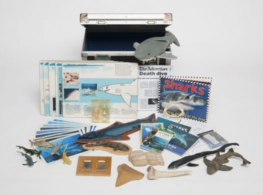 Museum in a Box - Shark