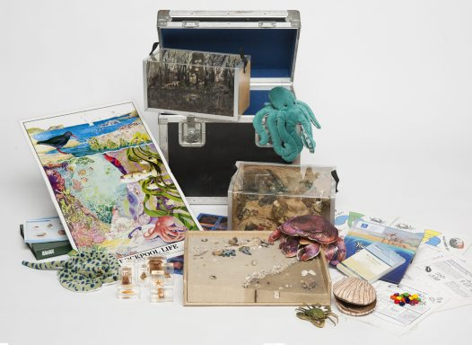 Museum in a Box - Life on the Seashores