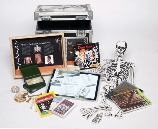 Museum in a Box - Skeletons