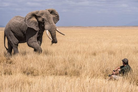 Elephant X-factor (Wildlife Photographer of the Year)