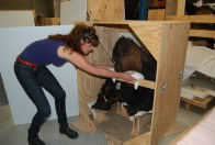 U-haul Gorillas - Packing Primates for a Big Move #1