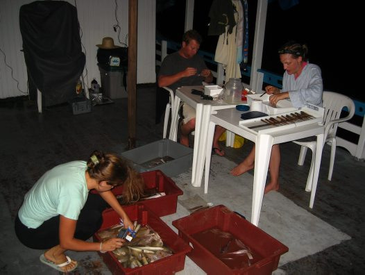 Fish specimens in the Amazon