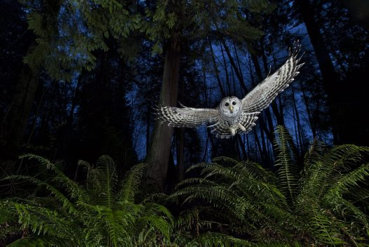 Wildlife Photographer of the Year #8
