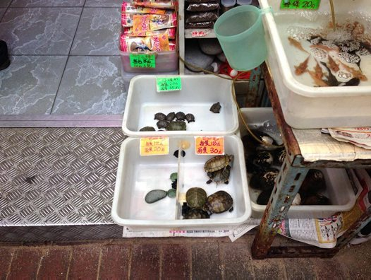Turtles and fish for sale