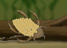 Water Bug Male Illustration