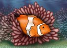 Clown Anemonefish Illustration