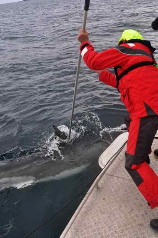 Tagging a White Shark