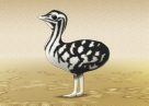 Australian Bustard chick Illustration