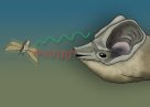 Little Northern Freetail-bat Illustration