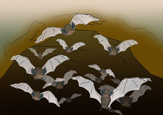 Little Bentwing-bats Illustration